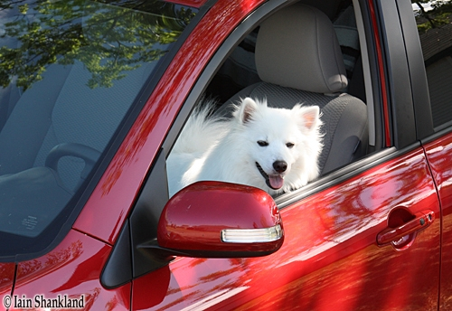 Road Test Special: Man's Best Friend, Shouldn't He Wear A Seatbelt Too?